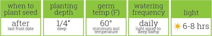 Ground Cherry-OUTDOOR - germination guide