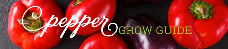 pepper-growguide