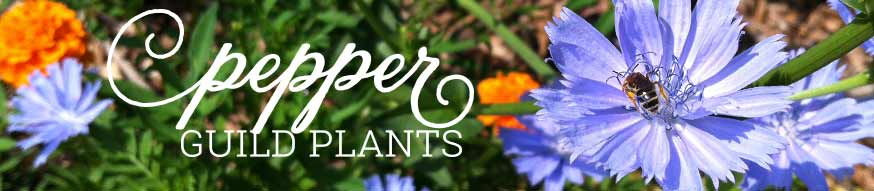 pepper-guild-plants