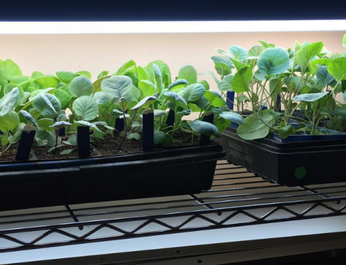Want to Garden Like a Pro? Here's a Simple and Affordable Indoor Grow Light Setup