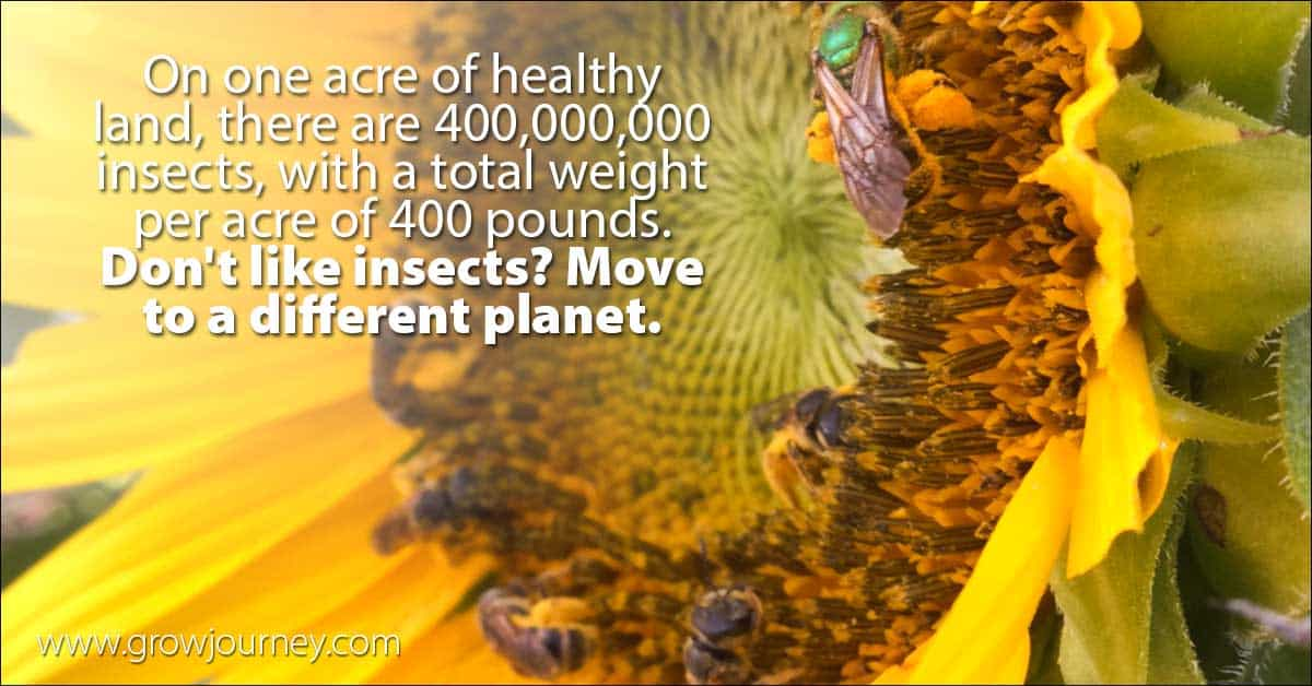 Insect facts - insects per acre of land | www.GrowJourney.com