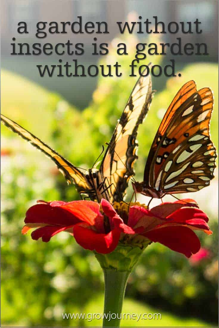 A garden without insects is a garden without food. www.GrowJourney.com