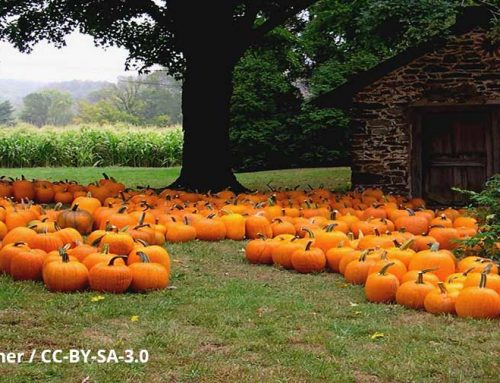 October Tip of the Month: 6 Amazing Pumpkin Facts
