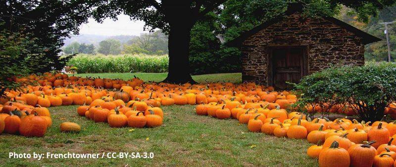 Oct2016-Featured-Image-pumpkin-web
