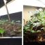 seedlings time progression