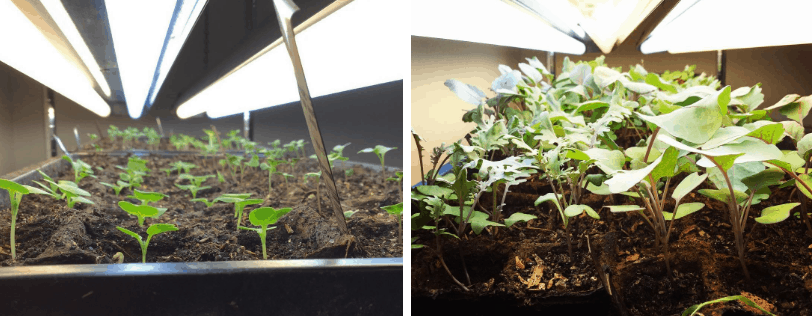 seedlings time progression