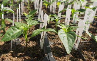healthy-seedlings-FI