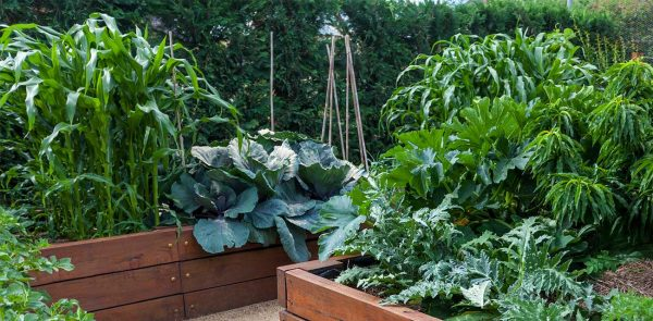 raised-beds-featured-image