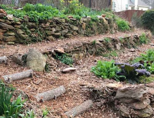 The Surprising Benefits Of Gardening Go Way Beyond Your Health