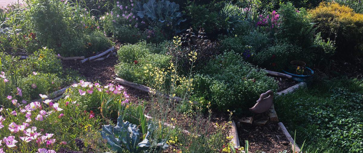 edible landscaping - edible organic landscaping