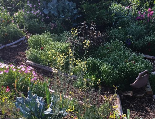Gorgeous Edible Landscaping Made Easy, Part 1 of 3: Design Theory (and How to Get Started)