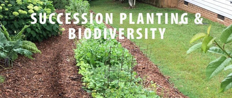 hugelkultur bed - succession planting and biodiversity