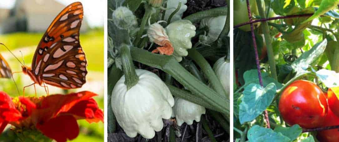 Our top 5 summer gardening tips growjourney seeds of the month club - Summer time gardening tips ...