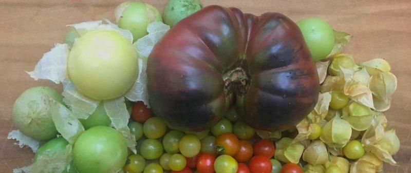 summer-nightshade-harvest-featured