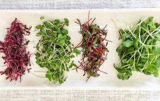 How to grow microgreens by GrowJourney