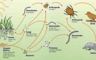 soil food web