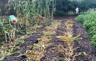 no-till organic gardening and farming