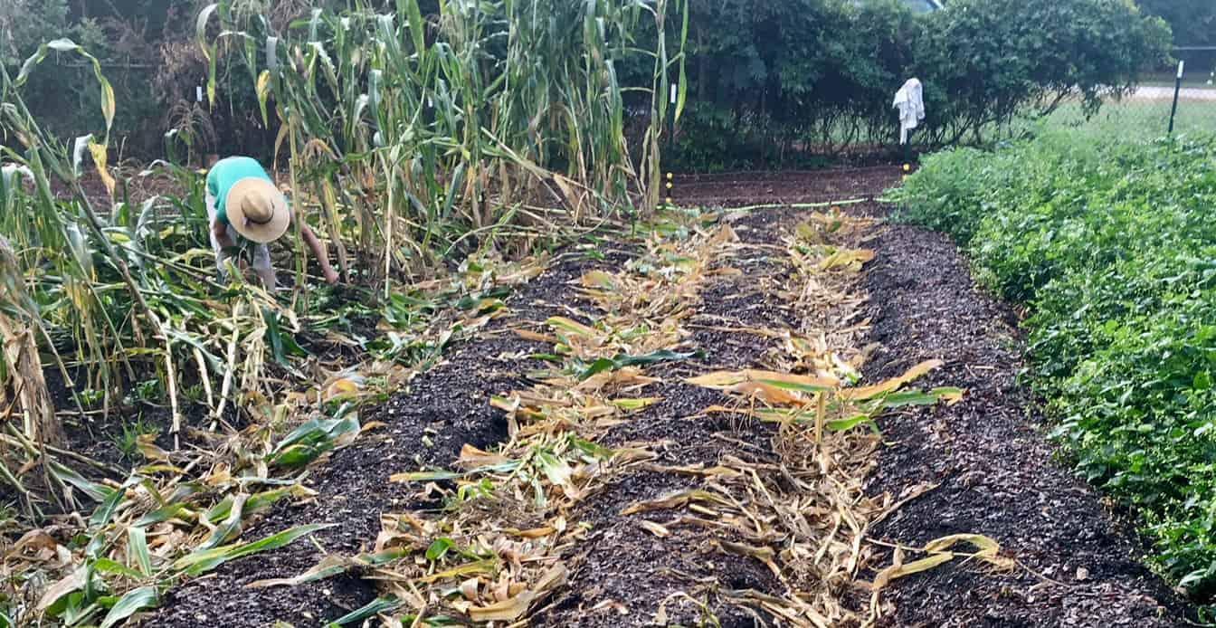no-till organic gardening and farming