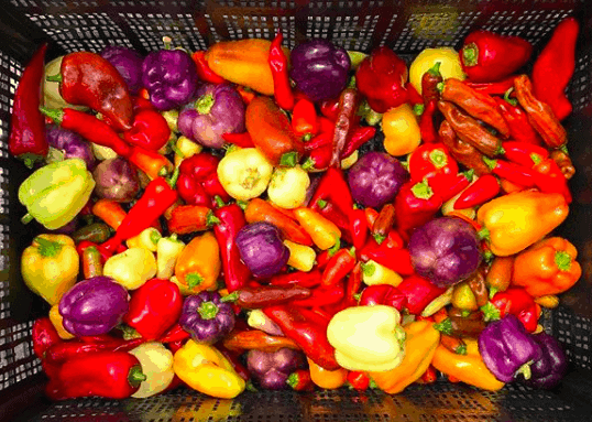 6 Creative Ways to Use Lots of Peppers