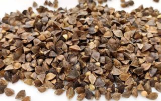 how to grow buckwheat