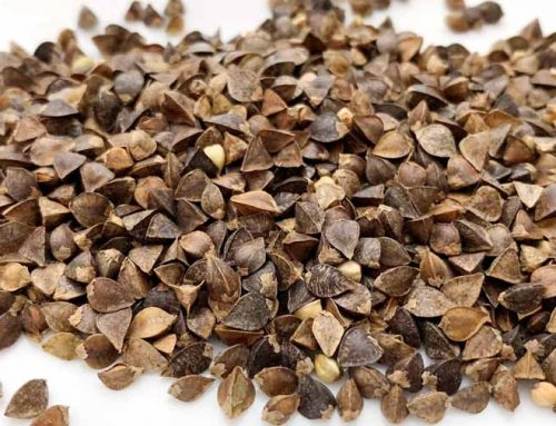 Why and how to grow buckwheat