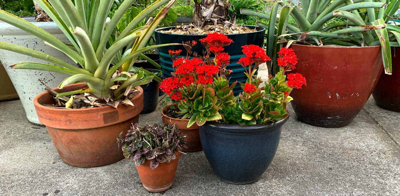 garden pot types compared - ceramic vs fabric vs plastic garden pots