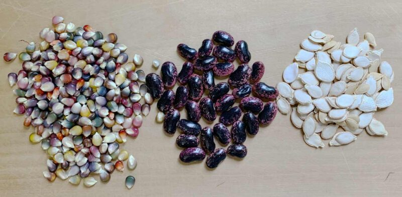 How long do garden seeds last? Complete seed viability list in this article.