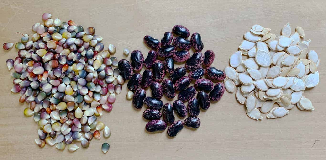 How long do seeds last? Seed longevity and storage guide…