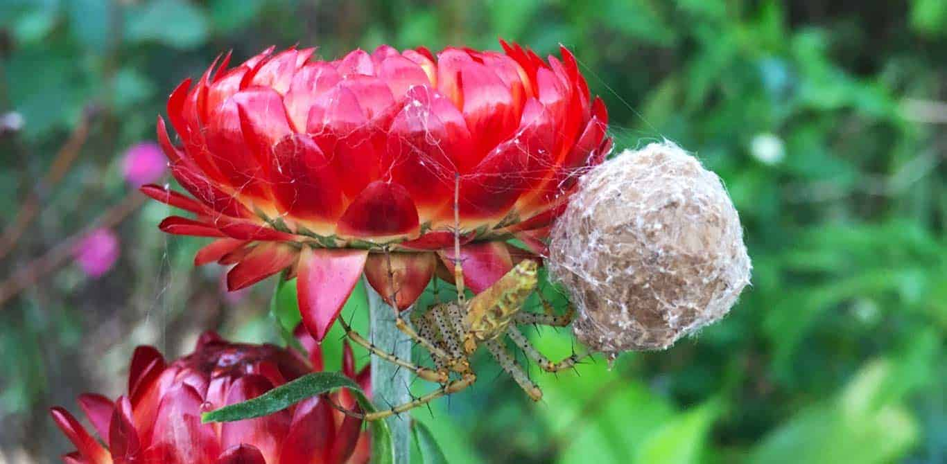 Got garden spiders? Here's why that's a good thing…